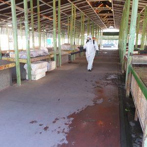 На пазара в Пазарджик ще се продават само храни