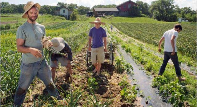 """Фонд """"Земеделие"""" финансира инвестициите на 880 млади фермери"""