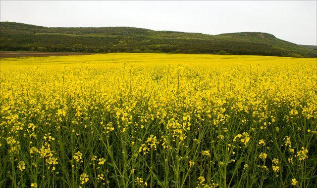 Оскъдни валежи в Пазарджишко бавят развитието на житните култури и рапицата
