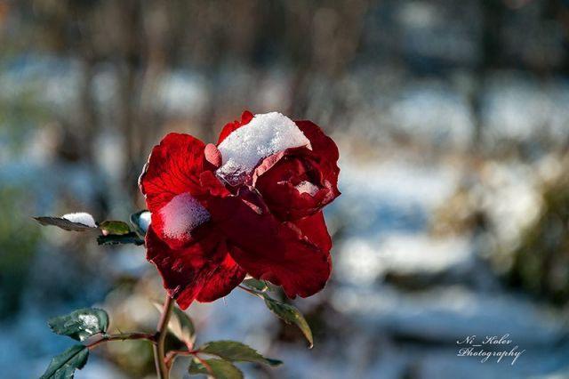 Прогноза за времето за 4 декември, честит първи сняг