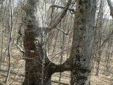 Защитени дървета от 16 вида са заснети на територията на РИОСВ-Пазарджик
